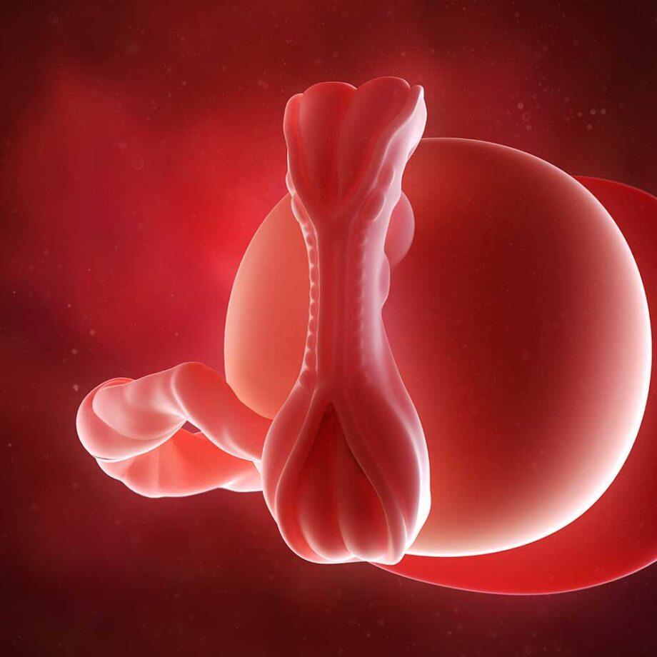 Gravid uge 5 | Nu ved du, at du er gravid (positiv test)